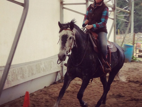 Shaping Can Make You A Better Horse Trainer