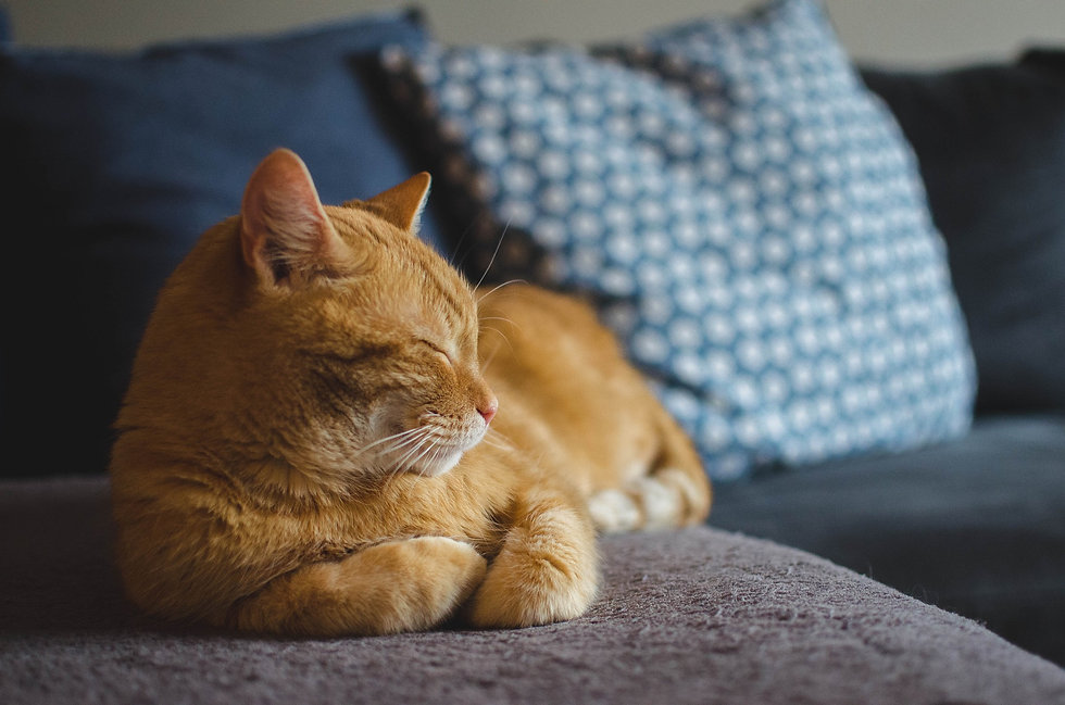 cat-3059075_1920.jpg