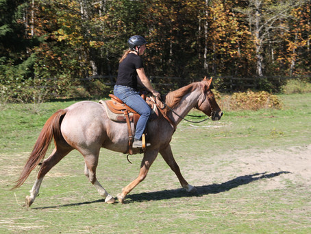 Horse Training Tip #2: Trail Riding Solo