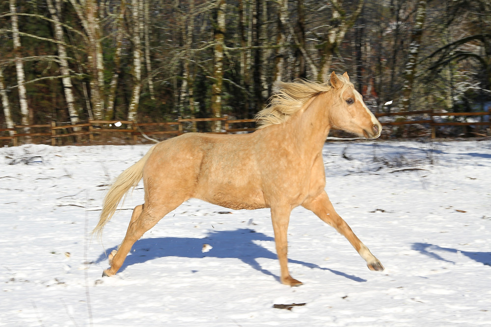 Anxious horse
