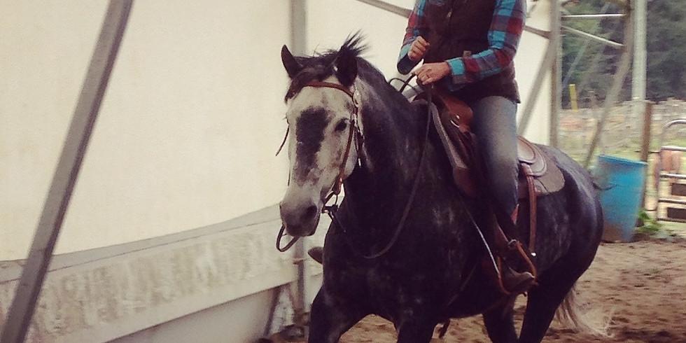 BARN CLUB: How Horses Learn
