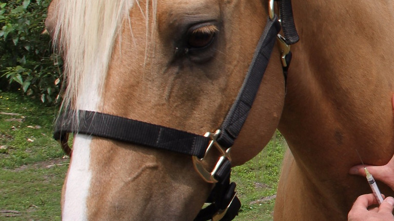 Cooperative Care and Horses
