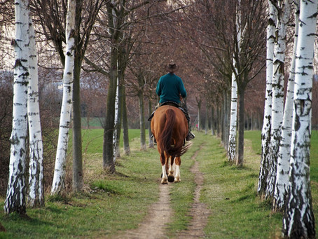 Horses (Likely) Don't Love Being Ridden: A Primer on How to Make it Suck Less