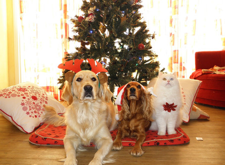 Perfect Pets This Holiday Season
