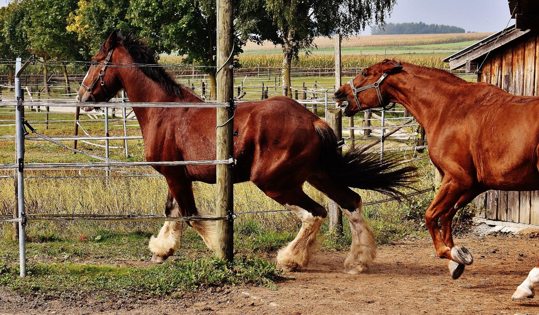 horse aggression_edited