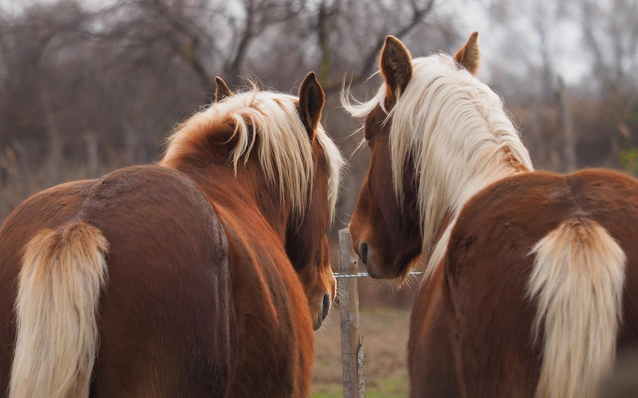 herd bound horse pixabay