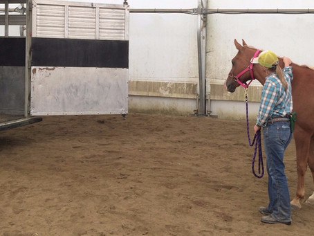 Expanding Your Horse's Comfort Zone - Part Two