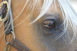 calcite eye david taylor_edited