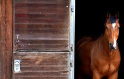 horse-2344193_1920_edited_edited_edited.