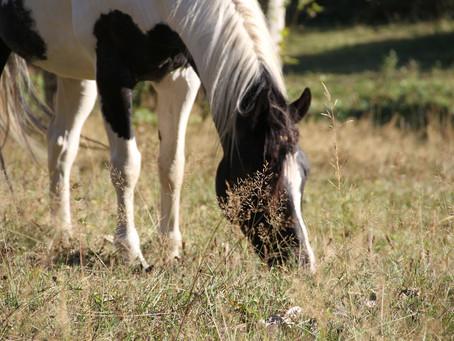 Behavioural Euthanasia of the Horse