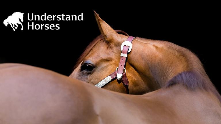 Horses Behaving Badly?