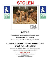 beetle doglost poster.jpg