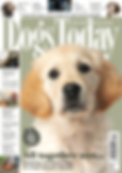 Dogs Today Magazine - Sept 2019