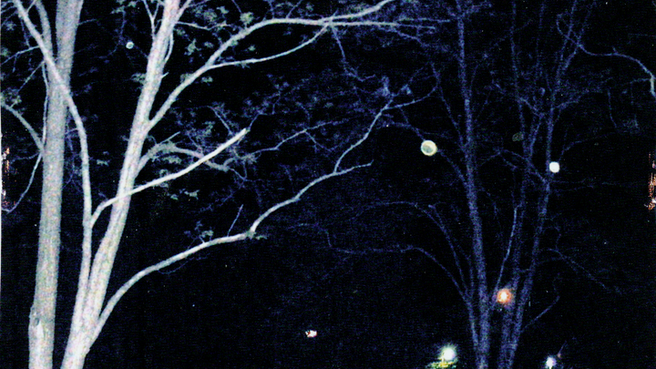 Orbs in trees.png