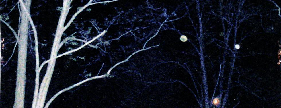 Orbs in trees.png