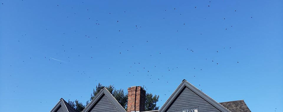 Birds over the witch house.jpg