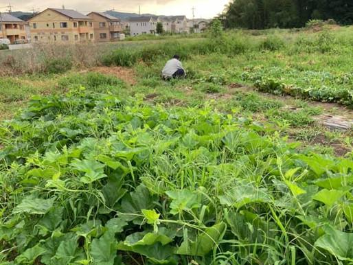 朝の農園☀ いつも感謝です