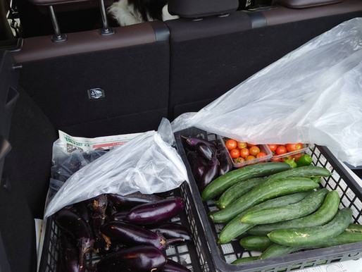 柴田さんからの新鮮野菜と、野草の海
