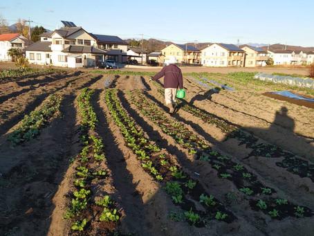 今日の子ども農園
