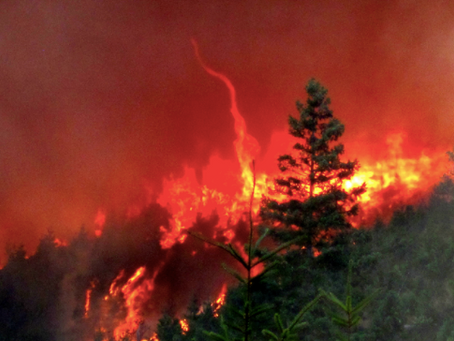 The Wildfire: A Vicious Cycle