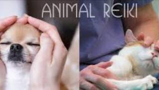 Reiki a los animalitos