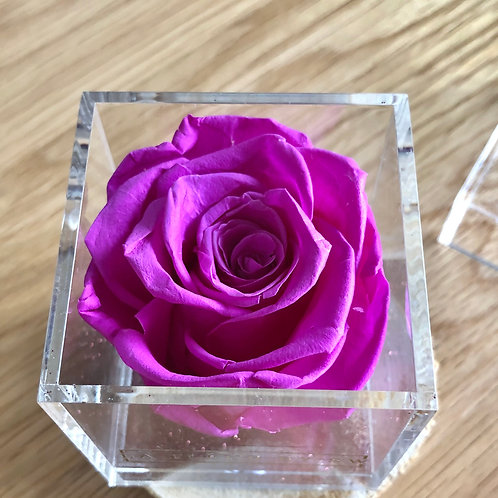 Violette Box Rose Éternelle