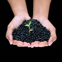 Black Soy Bean 1.jpg