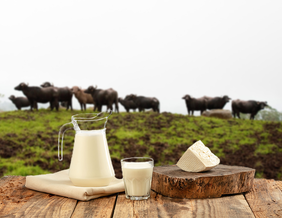 A2 milk water buffalo milk jar and cup in a wood table with water buffalo blurred in the back