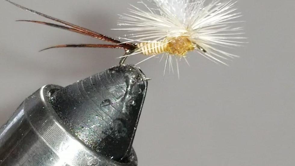 Quill body, sulphur parachute