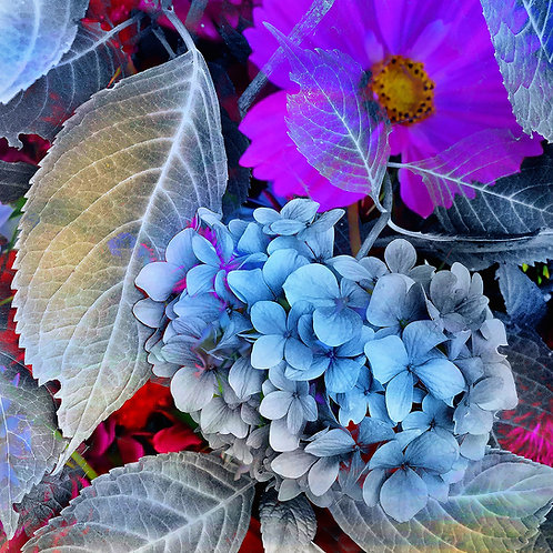 Floral Xray