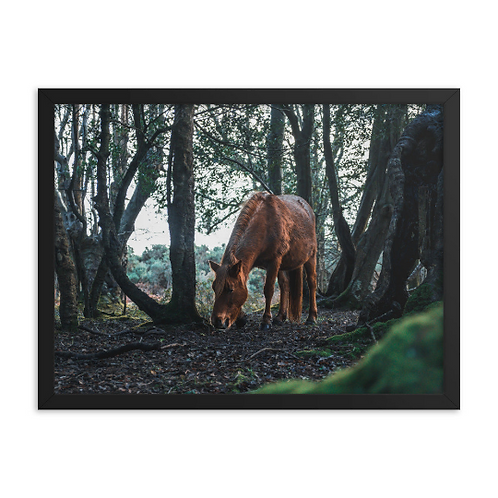 Wild Horse - The New Forest, England