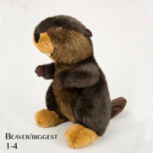 Beaver (Big) 1-4