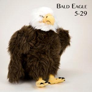Bald Eagle 5-29