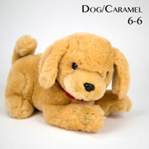 Dog 6-6