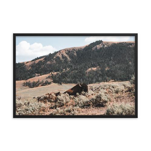 Bison - Yellowstone National Park, Wyoming