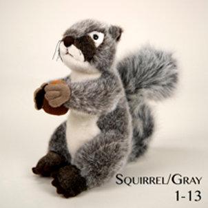 Squirrel 1-13