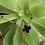 Thumbnail: collier Trèfle, couleurs froides