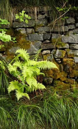 Brunning's Wall