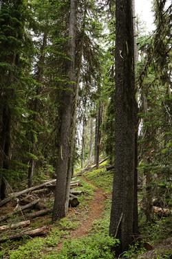 On the Trail to Garver Peak