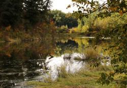 Clark Fork Backwater