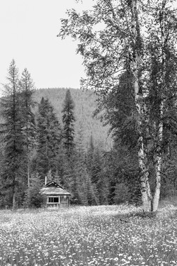 Cabin and Daisies