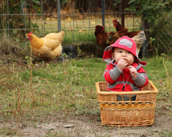 Charlie and the Chickens