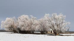Frozen Homestead