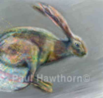 Paul Hawthorn Hare