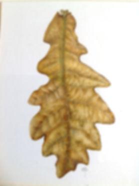 Sally Pond Oak Leaf