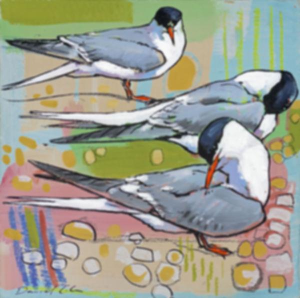 Daniel Cole Common Terns