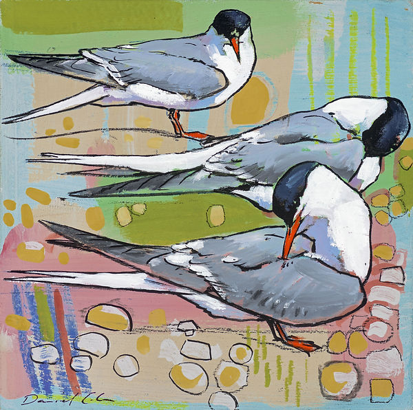 Daniel Cole Common Terns