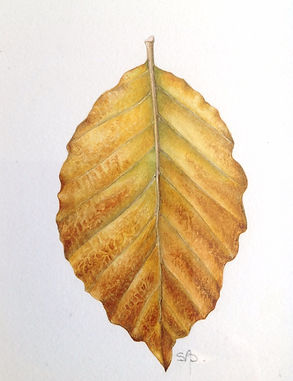 Sally Pond Beech Leaf