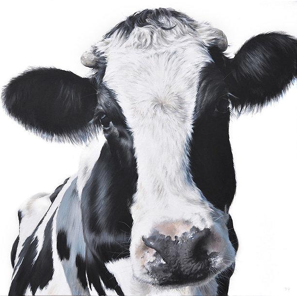 Horny cow.jpg