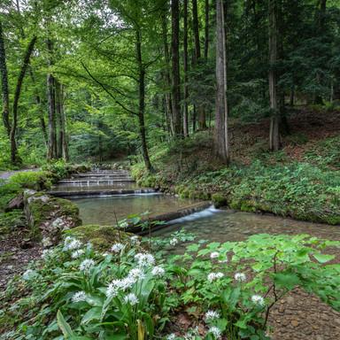 Wald Tobel